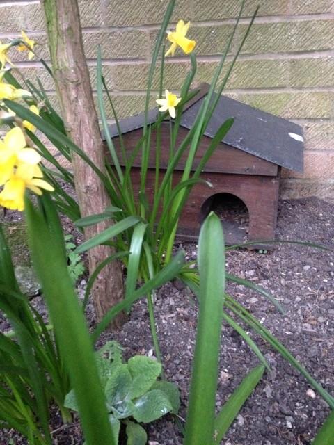 A Hedgehog house