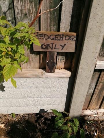 Hedgehog holes
